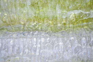green and white ice