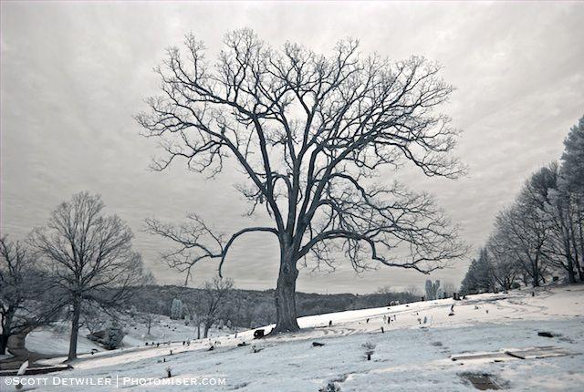 Cemetery Tree Infrared scottdetwiler-com