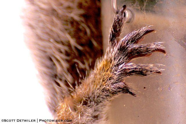 Squirrel Foot