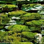 Mossy Rock Wall
