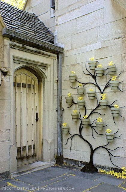 Hartwood Mansion Flowerpot Tree false color IR