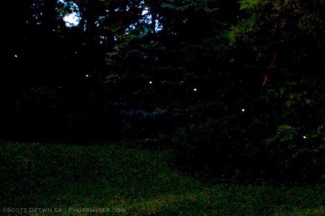 Firefly Flight