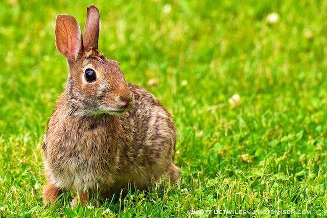 Teen Bunny