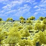 Cemetery, False Color IR