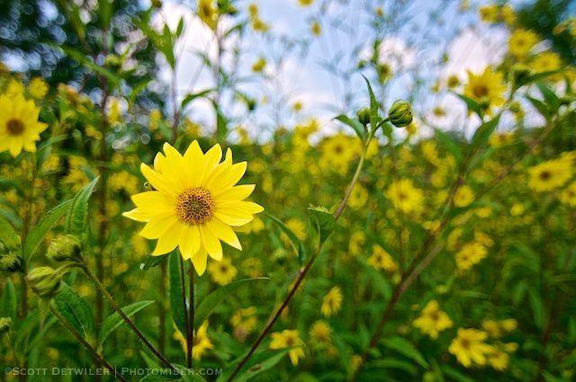 Yellow Composite