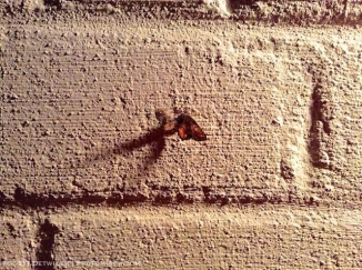 Moth on a brick wall lit by porchlight