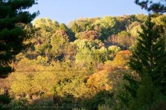 New Autumn Hillside