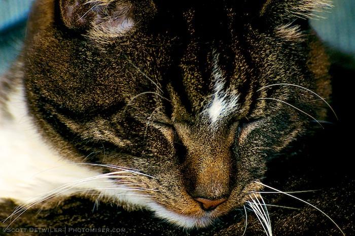 Eye Closer Cat