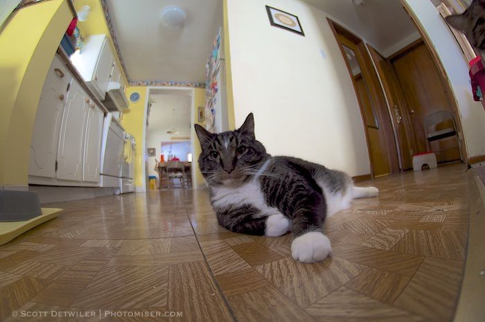 Sox the Cat mans his hallway intersection watch post
