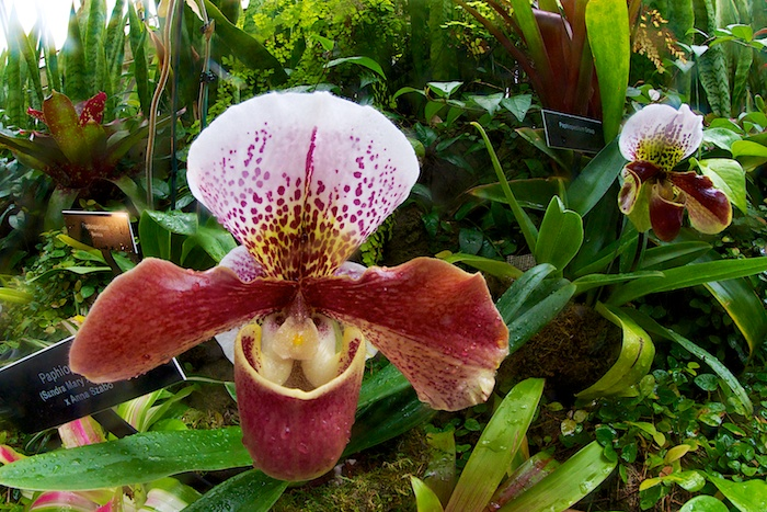Orchid, taken with Rokinon 8mm fisheye lens